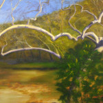 Sycamore Duet, 3ox24, $1,100