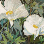 Matilija Poppies $140