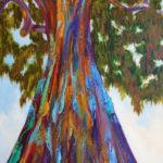 Rainbow Eucalyptus, SOLD